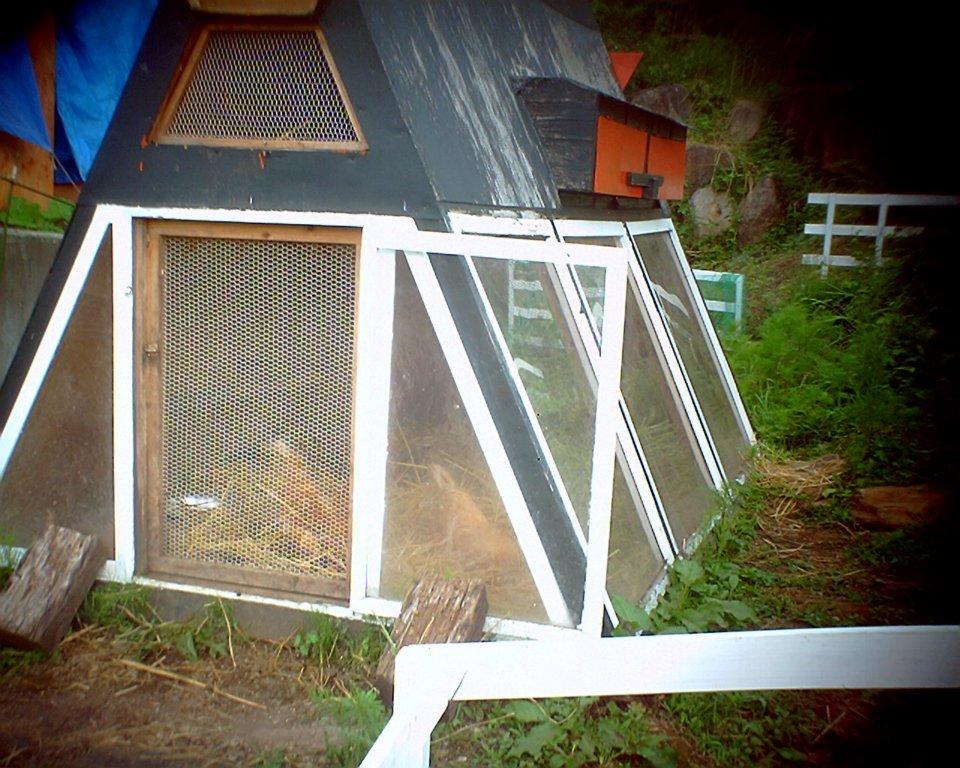 写真を撮るのを忘れて、ニワトリ小屋しか撮ってなかった自分の愚かさよ…